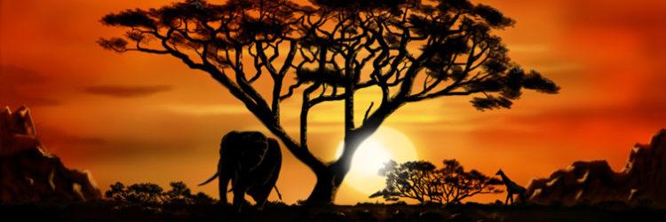 5-trattamenti-benessere-provenienti-dall'africa